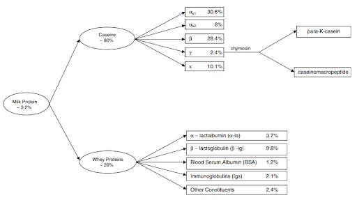 composicion-proteina-de-suero